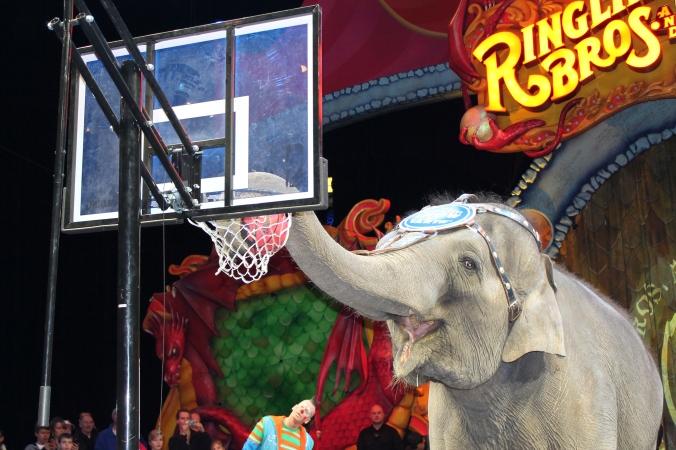 Circus 2013 022
