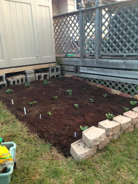Garden - planted